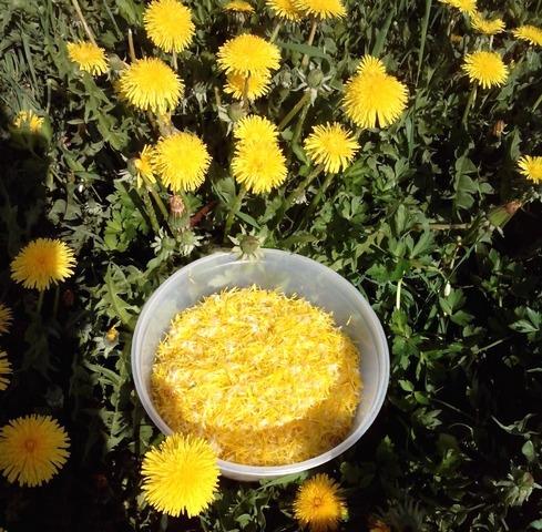Рецепты приготовления варенья из одуванчиков и его полезные свойства