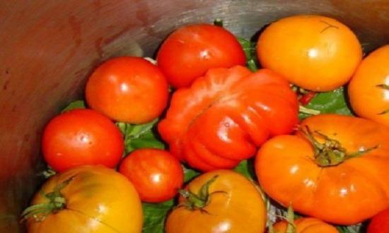 промываем и перебираем помидоры