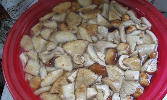 промыть грибы