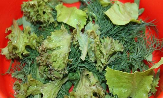 листья салата и укропа