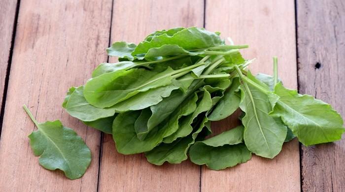 Заготовка щавеля на зиму — лучшие рецепты, чтобы сохранить витамины