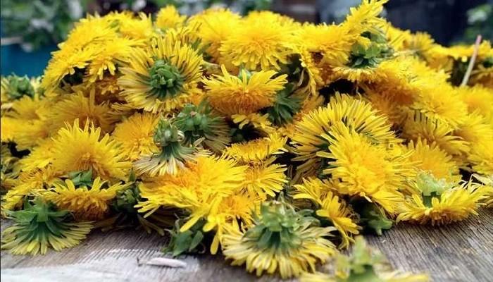 Цветы одуванчиков