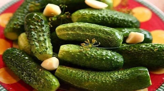 Как посолить малосольные огурцы быстро и вкусно — рецепты приготовления с укропом и чесноком