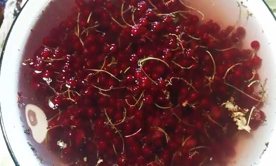 Замачиваем красную смородину в воде